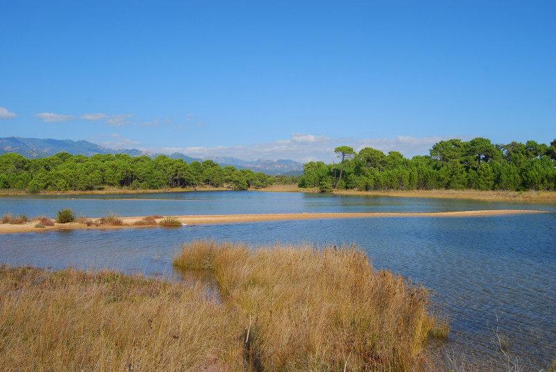 Vue étang Vente de Villas Contemporaines Cala Rossa